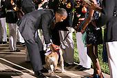 United States President Barack Obama pets Chesty XIV, the Marine Corps Mascot at the Marine Barracks Washington, D.C. Evening Parade in Washington, D.C., on Friday, June 27, 2014. <br /> Credit: Kristoffer Tripplaar  / Pool via CNP
