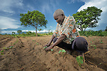 Nebert Pasidya Mkandawire, 63, encourages his bean plants on his farm in Dofu, an area in northern Malawi which has been hit hard by drought and hunger. The ACT Alliance is helping residents of this community discover new ways to grow more food, thus achieving food security for their families.