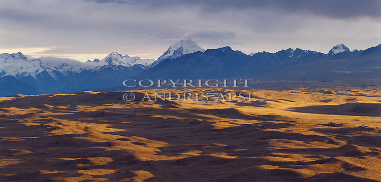 Sunrise on golden tussock. Mount Cook in background. Mackenzie Country. Canterbury Region. New Zealand.