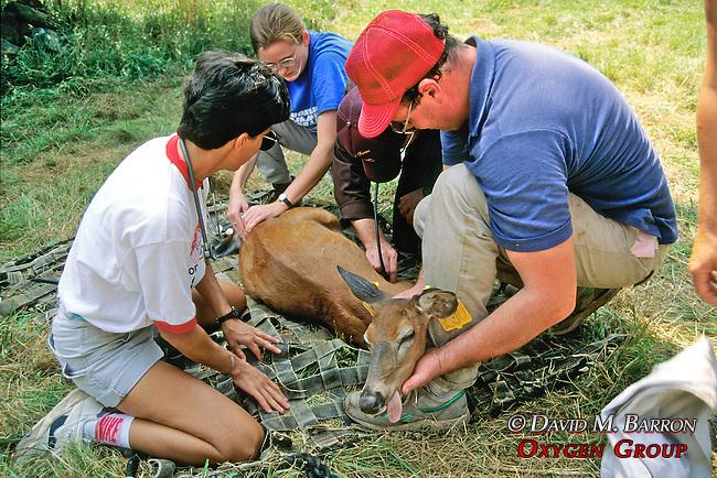 Bill McShea Mobilizing White-tailed Deer