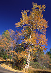 Autumn foliage at Cuyamaca Rancho State Park