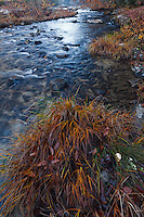Autumn grasses along the Chattooga