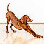 20120324-25 Target Pets Audition