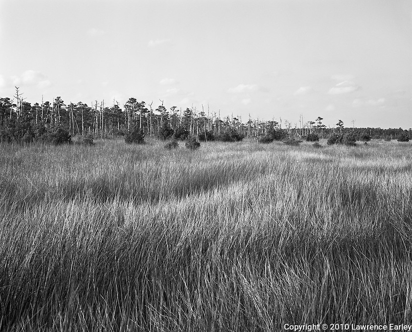 Rippling marsh grasses sway to the breezes along N.C. Highway 70 in coastal Carteret County.  Though fishing villages have been present in Down East North Carolina for more than 200 years, the extensive wetlands isolated the fishing villages from each other until the 20th century.  Now roads and bridges connect these villages with Beaufort and the North Carolina mainland.