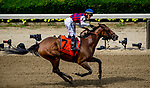 June 8, 2019 : #7, Guarana, ridden by jockey Jose Ortiz, wins the Acorn Stakes on Belmont Stakes Festival Saturday at Belmont Park in Elmont, New York. John Voorhees/Eclipse Sportswire/CSM
