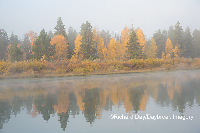 67545-09317 Fall color and fog along the Snake River near Oxbow Bend,  Grand Teton National Park, WY
