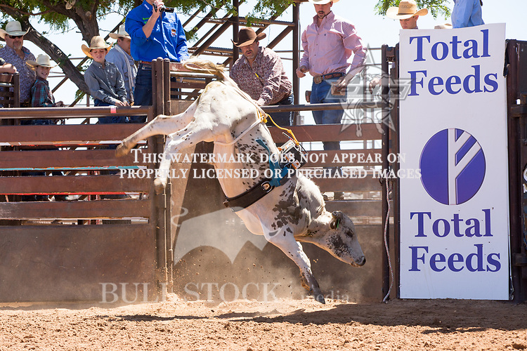 Page 46C- from Karley Page / D&H Cattle Co during the Jr. Futurity, at the 2017 ABBI American Heritage West, Los Lunas, NM. Photo Andre Silva