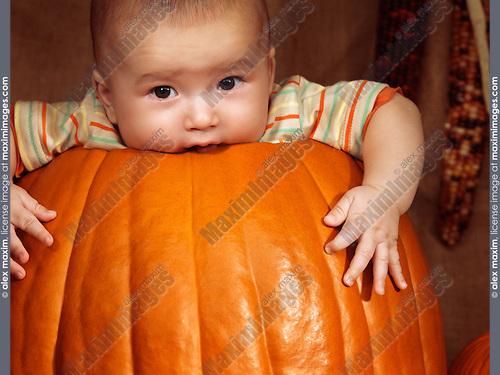 Baby boy sitting inside a big pumpkin. Fall season holidays Thanksgiving and Halloween humorous artistic portrait.