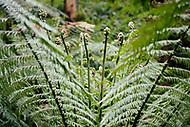 Image Ref: CA581<br /> Location: Lake Elizabeth, Forrest<br /> Date of Shot: 20.10.18