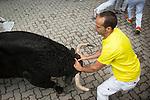 2013-07-12 6th Running of the bulls