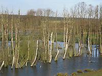 Moorweiher, Feuchtgebiet, Totholz, Sumpf, Tümpel, Bruchwald, Wiedervernässung, ehemaliges Feuchtgebiet wurde im Rahmen von Naturschutzmaßnahmen wieder verässt, darauf hin starben Birken und andere Bäume ab, Hellmoor, Panten, Schleswig-Holstein
