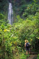 Hiker passes lush greenery on the Pipiwai Trail to Waimoku Falls in the Kipahulu District of Haleakala National Park, Maui