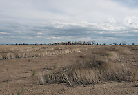 Dried up and abandoned farm land in Crowley County, Colorado, Wednesday, May 18, 2016. Crowley County, once a thriving agricultural community with over 50,000 acres of farm land, sold it's water rights the City of Aurora for municipal use and now farms a little more than 5,000 acres of land. The result has seen dried and dead farm land and abandoned homesteads. Crowley County represents a dire look at how mismanaged water rights can have devastating effects on an already drought prone region.<br /> Photo by Matt Nager