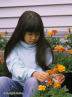 HS18-044z  Child picking flowers - marigolds - Tagetes spp