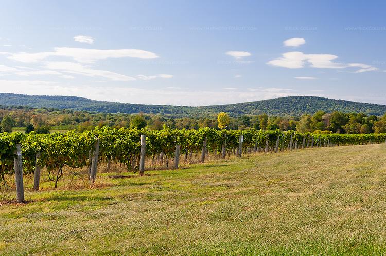 Northern virginia wedding photographers breaux vineyards winery