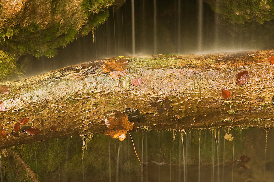 Trunk and foliage, waterfall detail, Plitvice National Park, Croatia