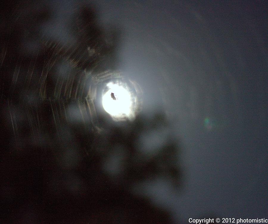 spider web around the moon