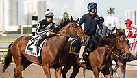 HALLANDALE BEACH, FL - March 31: Coach Rocks, #2, with Luis Saez in the irons for trainer Dale Romans parades onto the track for the 48th running of the Gulfstream Park Oaks on March 31, 2018 in Hallandale Beach, FL. (Photo by Carson Dennis/Eclipse Sportswire/Getty Images.)
