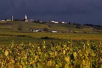 Europe/France/Pays de la Loire/44/Loire-Atlantique/Env Le Loroux-Bottereau : Vignoble AOC Muscadet du Sèvre et Maine et moulin