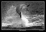 Fungi The Dingle Dolphin.<br /> Picture: macmonagle archive<br /> e: info@macmonagle.com