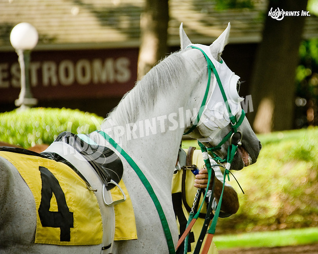Sergeant Pepper MHF at Delaware Park on 8/20/14