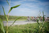 corn peloton<br /> <br /> 99th (open) Flemish Championships 2014<br /> (&quot;Kampioenschap van Vlaanderen&quot;)