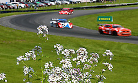 Cars race past wildflowers, Memorial Day Classic Grand-Am Roles Series race, Lime Rock Park, Lakeville, CT, May 20, 2011.  (Photo by Brian Cleary/www.bcpix.com)