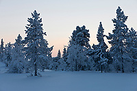 Europe/Finlande/Laponie/Env de Levi: Paysage de montagne en hiver