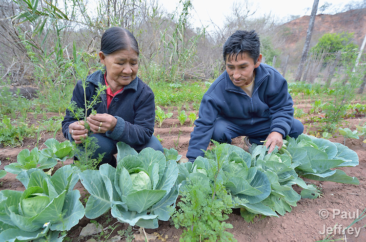 Justina Romero and her husband, Adolfo Torres, work together in their garden in the Guarani indigenous village of Kapiguasuti, Bolivia. They and their neighbors started the gardens with assistance from Church World Service, supplementing their corn-based diet with nutritious vegetables and fruits.