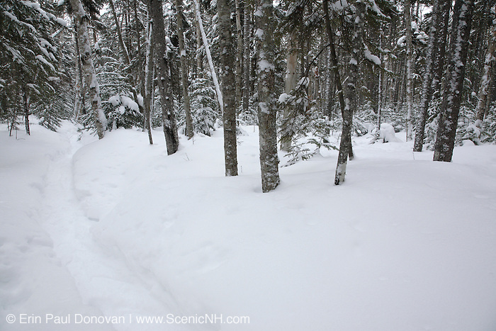 Snow covered forest along the Hancock Notch Trail in the White Mountains, New Hampshire USA during the winter months.