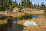 Outlet creek from Roman nose Lake in the Selkirk mountains of North Idaho.
