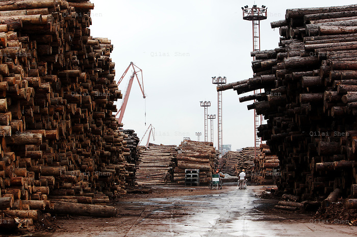 Workers walks past rolls of imported timber at a dock in Shanghai, China on August 30th, 2009. While China has put a ban on the logging of the its limited remaining old growth forests, the country's ever growing appetite for timber is now exerting enormous pressure on the forests of South East Asia and eastern Russia, often in the form of illegal logging.