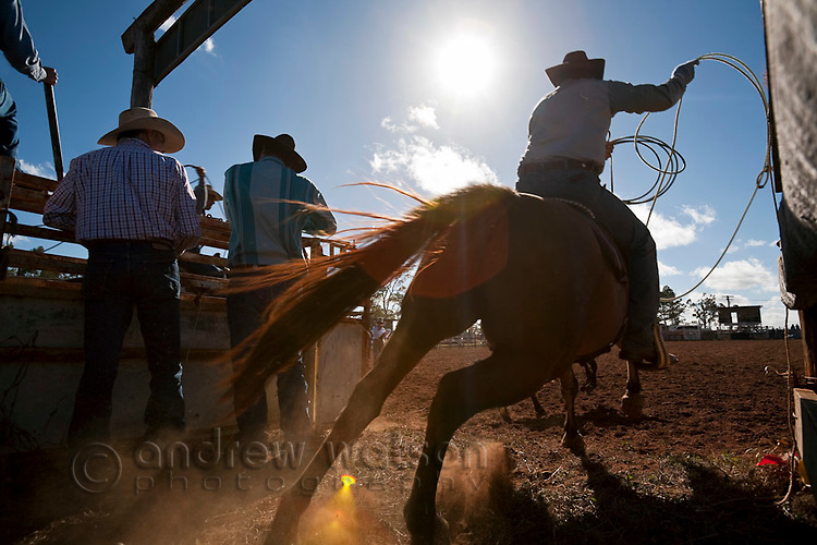 Cowboy on horseback with lasso in hand during team calf-roping competition.  Calf-roping involves the competitor on horseback first lassoing the calf and then dismounting to throw the calf and bind its legs.  Mt Garnet Rodeo, Mt Garnet, Queensland, Australia