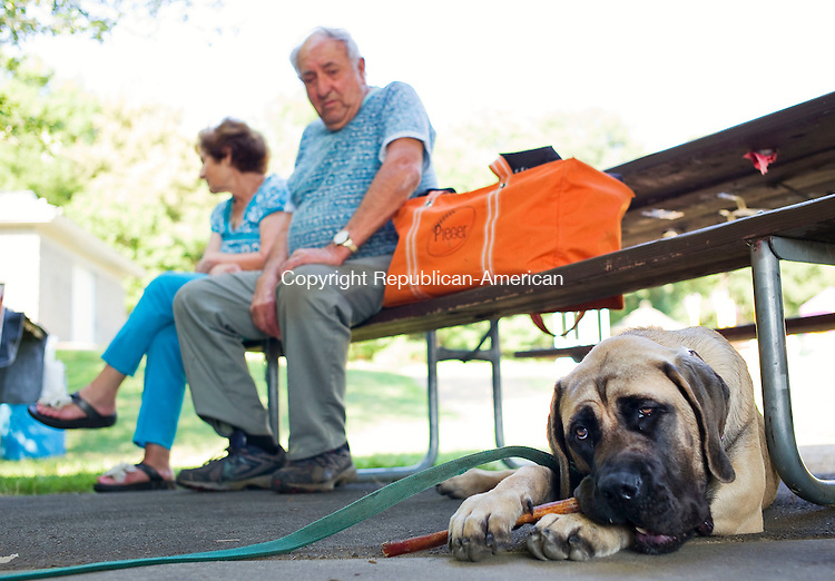 Watertown, CT- 14 August 2015-081415CM01- Blue, a 6 month old English Mastiff, owned by Laura Pieger Watertown, chews on a bone during Watertown's Coolest Canine Contest Veteran's Memorial Park in Watertown on Friday. Looking on is Vinny Basile with his wife, Anna, both from Oakville.  The event, sponsored by the town clerk's office featured dog contests and a dog/owner look-alike event.  Christopher Massa Republican-American