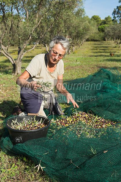 Europe/Provence-Alpes-Côte d'Azur/83/Var/Iles d'Hyères/Ile de Porquerolles:  Marie-Claude Cano récolte les olives des  vergers-conservatoires  du Conservatoire botanique national méditerranéen de Porquerolles, plus de 110 variétés d'oliviers, sur l'île de Porquerolles<br /> AUTO N°: 2012-417