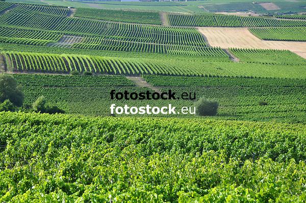 Blick vom Kloppberg über die Weinberge der Lagen Dittelsheimer Kloppberg, Pfeffermütze und Leckerberg
