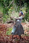 A woman clears brush from a farm field in Mizak, a small village in the south of Haiti.