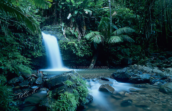 Juan Diego Waterfall in Rainforest, Juan Diego Trail, El Yunque, Caribbean National Forest, Puerto Rico, USA