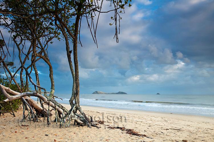 Mangrove trees on beach with Double Island in background.  Kewarra Beach, Cairns, Queensland, Australia