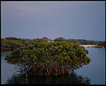 MARCH 2003 -- Pelican Island, Florida -- Audubon Magazine -- Pelican Island Is the first wildlife refuge in the US, just celebrated it's centenial celebration.  President Teddy Roosvelt enacted the legislation for the island in the height of the Great Florida Bird Wars. Originally it was over five acres now just over two acres big. US Wildlife officers replenish the sandbars with Oyster shells. .