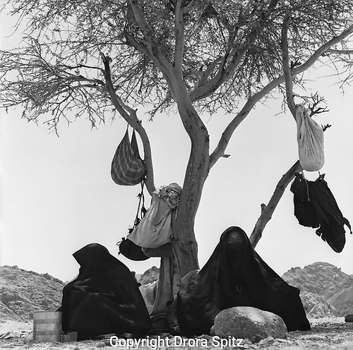 Bedouin women sitting under acacia tree in Sinai desert,