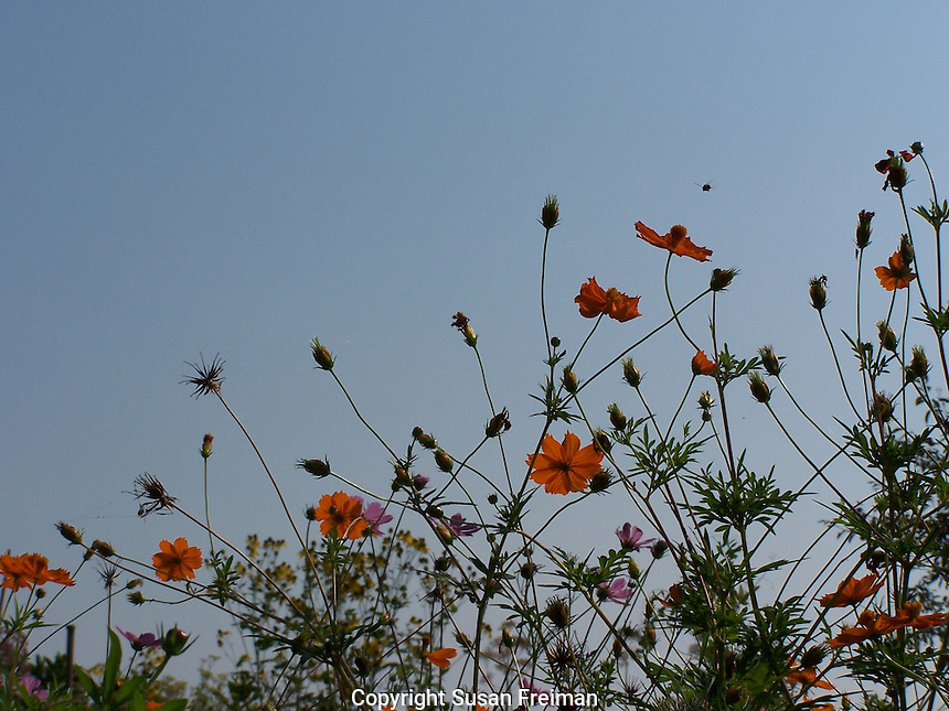 Flowers/Bugs/August