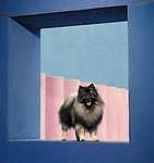 Keeshond<br />