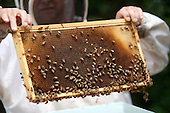 Washington, DC - June 9, 2009 -- Charlie Brandts, a White House carpenter as well as beekeeper, collects the first batch of honey from the beehives on the South Lawn of the White House, June 10, 2009.  .Mandatory Credit: Lawrence Jackson - White House via CNP