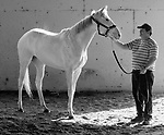 Lake Barkley (2015 white filly, by El Romeo - Snow Baby Go)