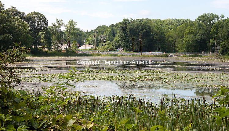 WATERBURY- JULY 10 2014 070914DA02- Neighbors on Allen St. in Waterbury complain water level problems have turned once-pretty Pritchard's Pond into a swamp.<br /> Darlene Douty Republican American