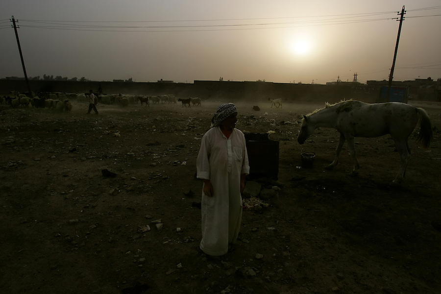 An Iraqi man tends to a tethered horse in the Baghdad Shiite neighborhood of Shula on Sunday August 20, 2006.