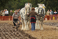 Horse ploughing at Cheshire Ploughing Match.....Copyright..John Eveson, Dinkling Green Farm, Whitewell, Clitheroe, Lancashire. BB7 3BN.01995 61280. 07973 482705.j.r.eveson@btinternet.com.www.johneveson.com