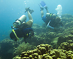 "Diving Bonaire, Netherland Antilles -- Divers explore the reef. (""Ol' Blue"" dive site)."