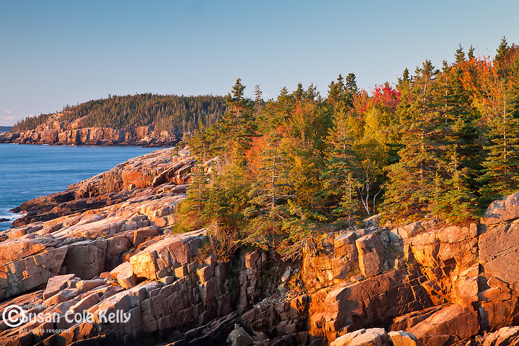 Fall foliage and sunrise on the coastal cliffs in Acadia National Park, Downeast, ME, USA